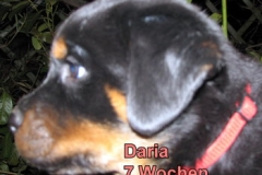 7Wo Daria